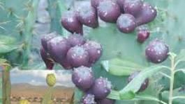 Création d'une agence algérienne de valorisation des produits agricoles du terroir