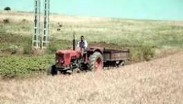 La mafia du foncier agricole sévit impunément à Oran