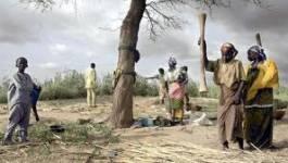 Niger : un million de personnes en insécurité alimentaire grave en 2012