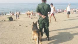 Algérie : Le gouvernement redoute des attaques sur les plages