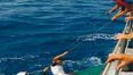 600 dépouilles de harragas algériens risquent d'être incinérées en Espagne