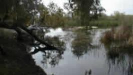 Algérie-Parc naturel d'El Kala : Belkhadem refuse le tracé de contournement de l'autoroute