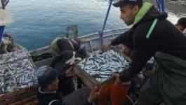 Oran : mise à niveau et résistance des armateurs et mandataires