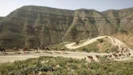 Ethiopie : cinq touristes étrangers tués dans une attaque