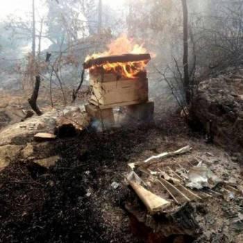 Incendies de forêts : qui a intérêt à entretenir l'écran de fumée ? (II)