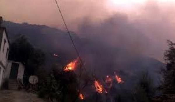 Les forêts algériennes ont subi des dommages inestimables cet été.