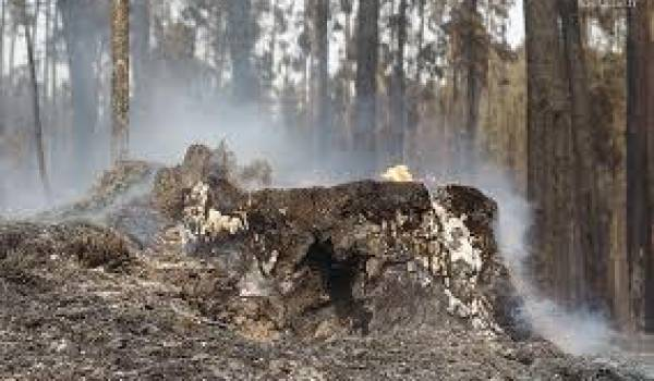 Les flammes ravagent les massifs forestiers chaque été.