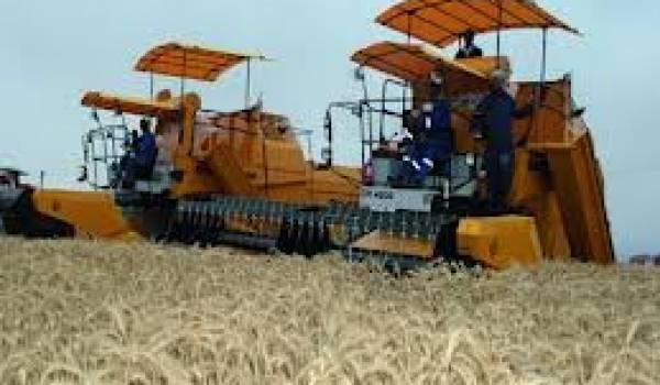 36 contingents agricoles à l'importation en Algérie seront désormais supprimés ou réaménagés.