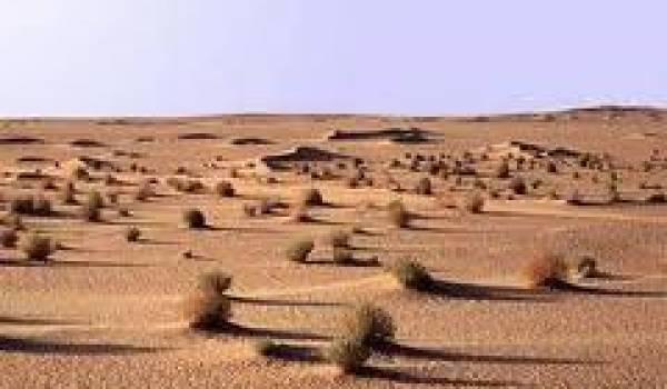 Le barrage vert n'aura finalement pas arrêté l'avancée du désert.