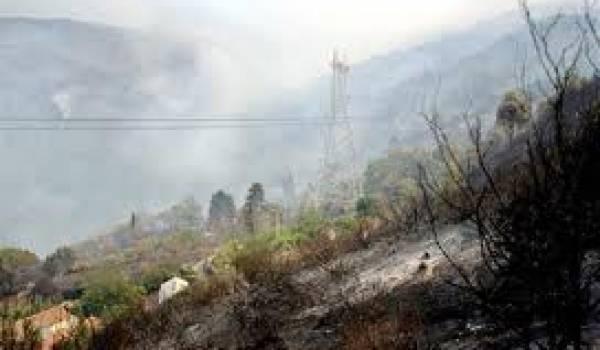 D'importants feux de forêts se sont déclarés dans la région de Béjaia