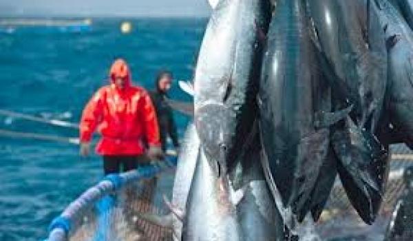Le quota algérien de pêche au thon est fixé à 143 t.