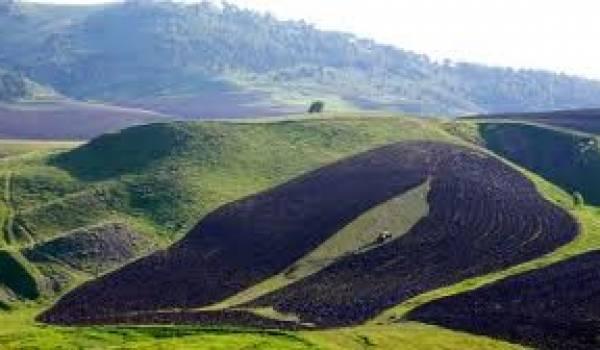 Recensement agricole en 2013 : la FAO assistera l'Algérie