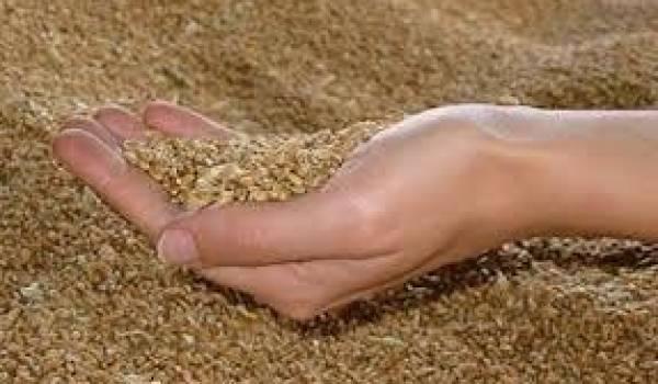 La facture de l'importation de blé pour 2012 est de 2,85 milliards de dollars.