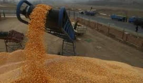 Céréales : hausse au-delà des attentes de la facture des importations algériennes