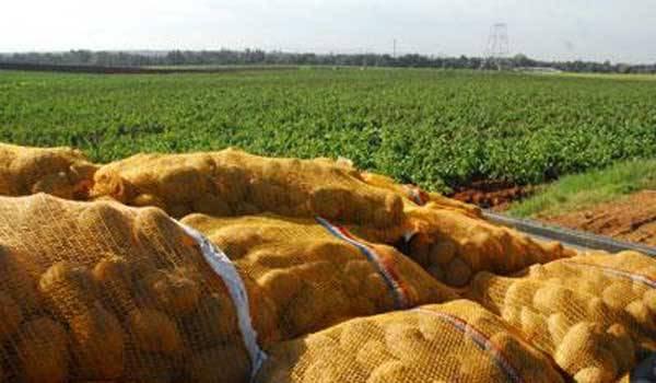 Malgré les milliards injectés dans le secteur, l'agriculture peine à répondre aux besoins des Algériens.