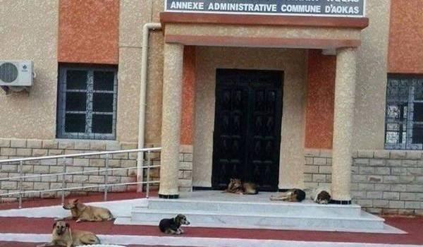 Ces chiens se reposent-ils ou sont-ils chargés de surveiller les lieux ?