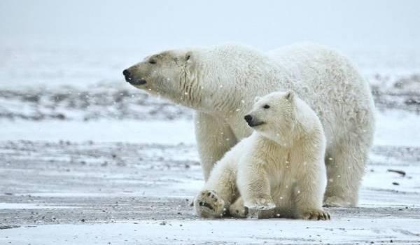 la planète perd ses espèces animales à un rythme effréné.