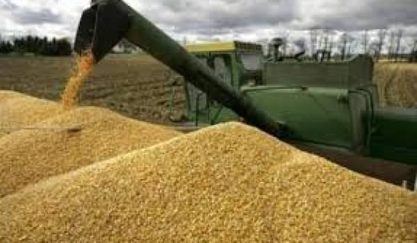 Algérie : hausse des importations de céréales sur les 4 premiers mois