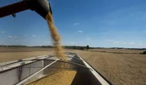 Les prix des céréales font une pause.