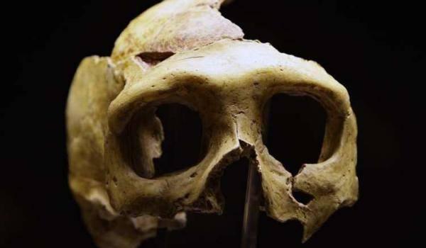 Nouvelle découverte concernant l'homme du Néandertal.