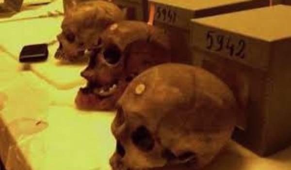 Des crânes de grands résistants algériens gardés dans un musée français.