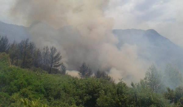 Bejaia embrasée : plus de 13 incendies ont ravagé près de 900 hectares