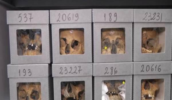 Des centaines de crânes de résistants algériens seraient éparpillés dans des musées français.