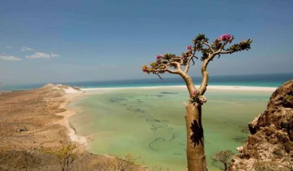 L'île de Socotra au Yémen, un patrimoine mondial en danger.