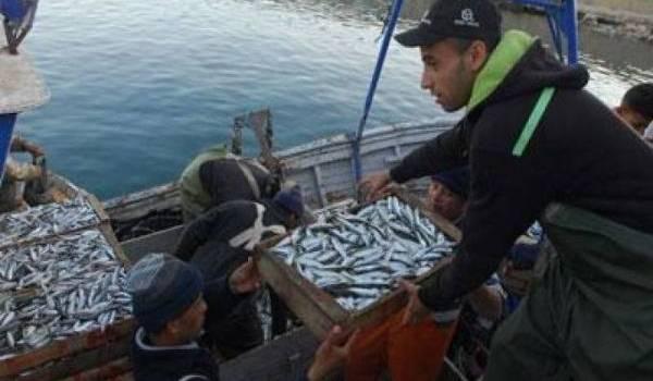 Le prix de la sardine touche les sommets.