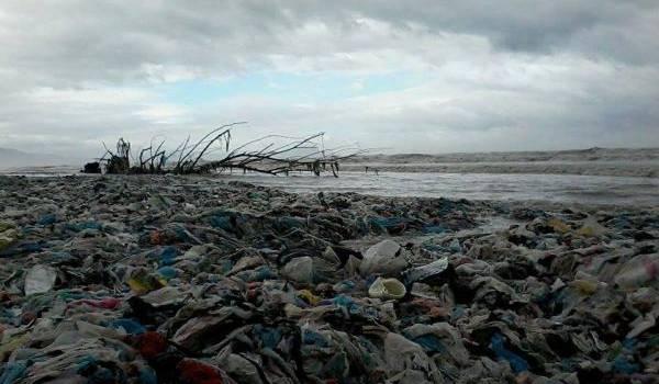 La pollutions a gagné tout le milieu.