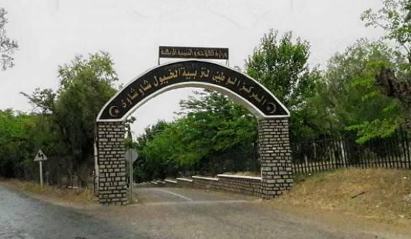 Bientôt, la construction d'une École nationale d'équitation à Tiaret
