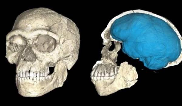 La découverte de fossiles Homo sapiens au Jebel Irhoud change la donne.