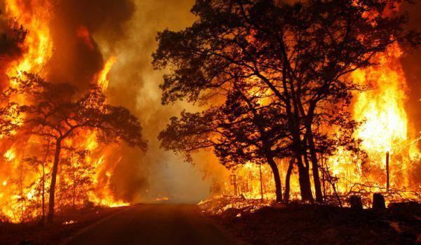 Près de 32 000 ha de couvert végétal partis en fumée depuis le début de l'été.