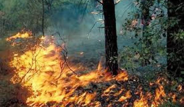 Incendies de forêts : 9 morts et 26 individus arrêtés par la gendarmerie