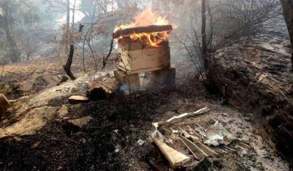De nombreux apiculteurs et arboriculteurs ont perdu le fruit de leur travail.