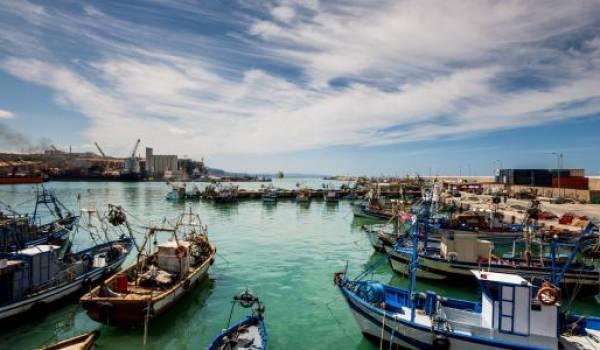 Pêche sauvage et pollution : les ressources halieutiques algériennes sérieusement menacées