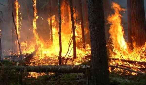 Des lignes de haute tension endommagées par les incendies