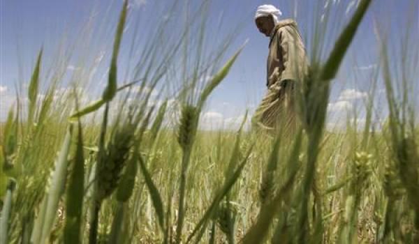 Le retard dans la mécanisation et l'irrigation pris par le monde agricole est très important.