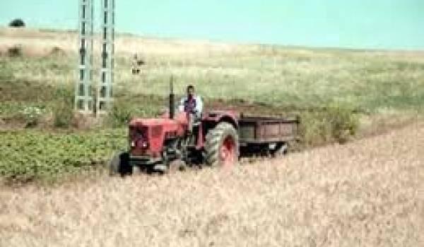 Si rien n'est fait à Oran, toutes les terres agricoles tomberont aux mains de la mafia du foncier.